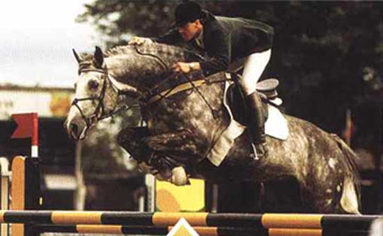 Cruising, Irish Sport Horse and international show jumper